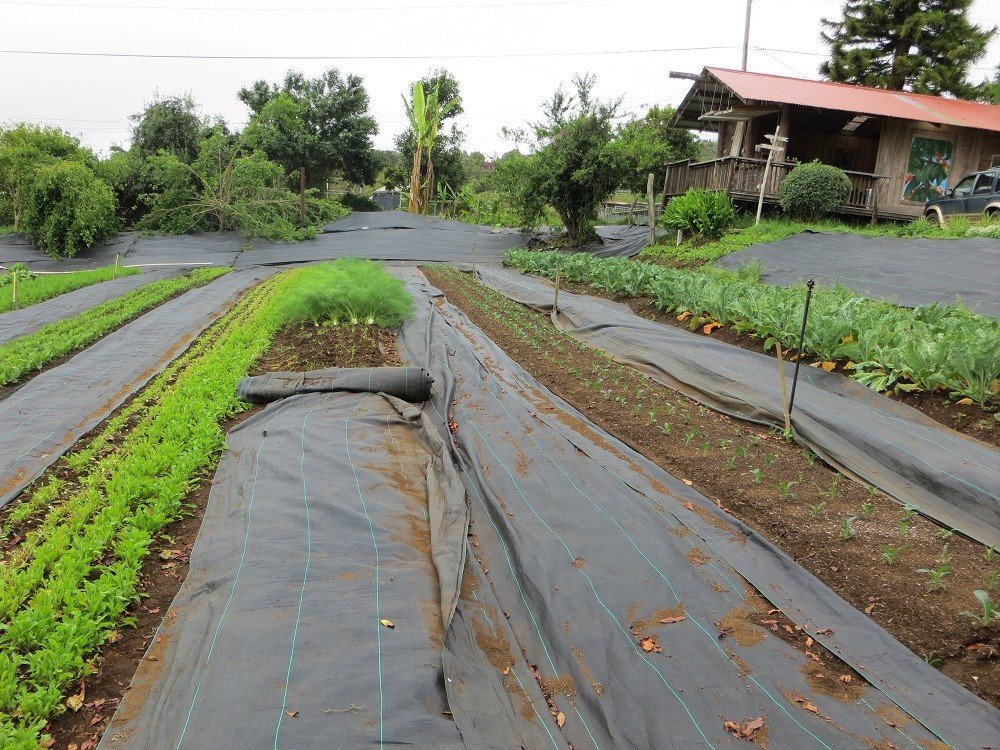 tarp laid over crops during biodynamic farming practices